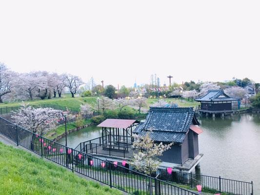 蛇池公園の桜_012