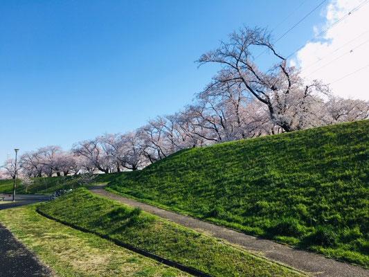 蛇池公園の桜_002