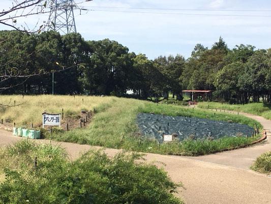 荒子川公園の花・植物_006