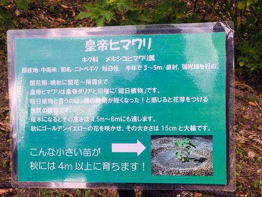 木曽三川公園センター_季節の花・植物_003