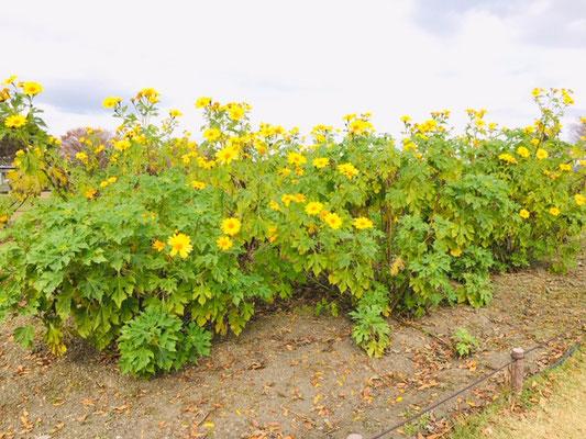 木曽三川公園センター_季節の花・植物_002