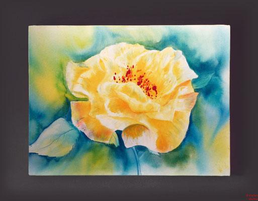 Rose gelb, Acryl, 2016, 80x60x2, verkauft