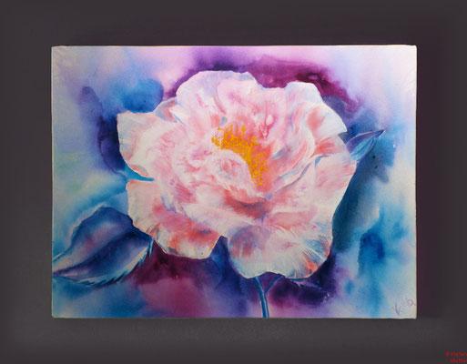 Rose rosé, Acryl, 2016, 90x70x2, sold