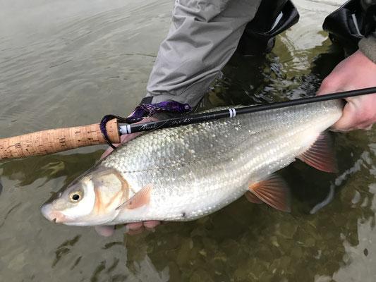 Danica Dudes Flyfishing Blog - Bayern, Germany, Munich, München, Deutschland Fliegenfischen