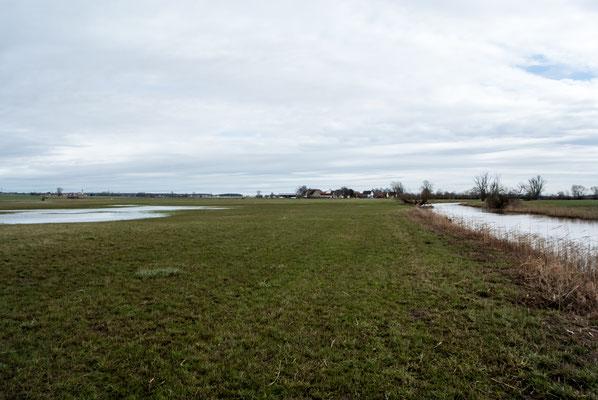 In einigen Mulden in der Aue drückt das immer noch hoch anstehende Grundwasser als sog. Qualmwasser an die Oberfläche. Idealer Laichgebiete für Amphibien...