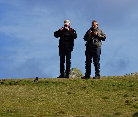 Papegaaiduiker (Fratercula arctica) komen wel erg dichtbij!