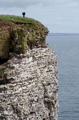 Kliffen met broedende zeevogels. Foto door Hans Peeters