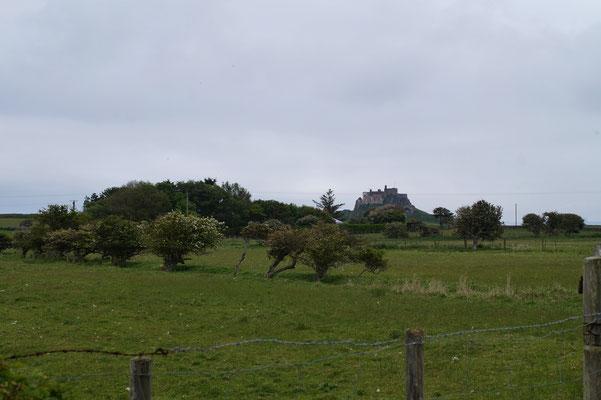 Lindisfarne casle doorheen de boomgaarden