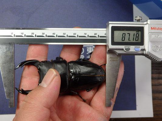 17R58-19/87.1mm