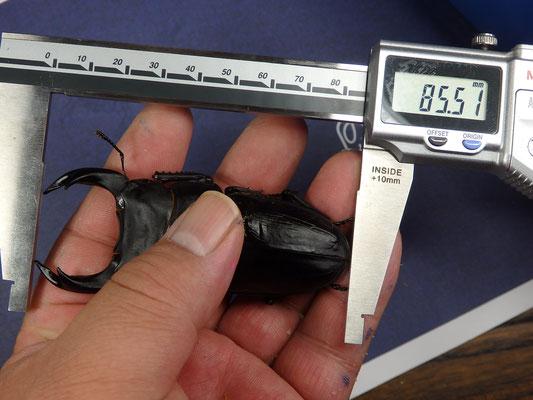 17R58-47/85.5mm