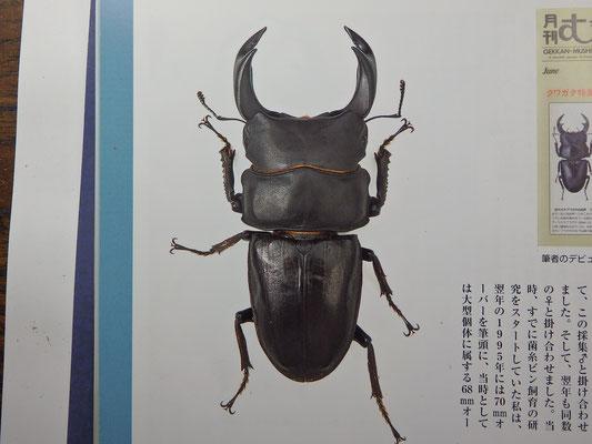 ①ビークワ2011年40号※森田氏撮影画像をビークワよりお借りしております。