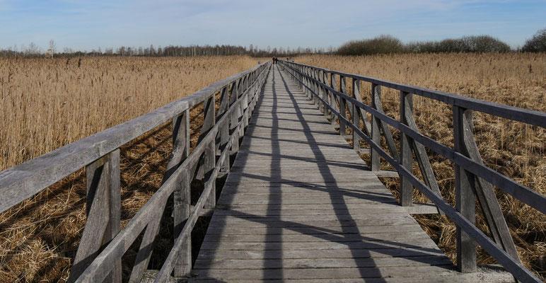 Der Federsee-Steg ist 1,4 km lang (Siegfried)