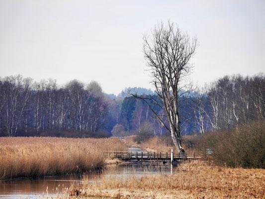 Das Ried und der Bannwald am Federsee (Werner)