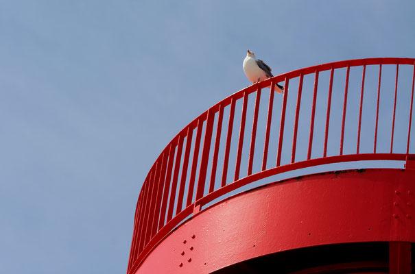 Vom Leuchtturm hat die Möwe eine gute Sicht