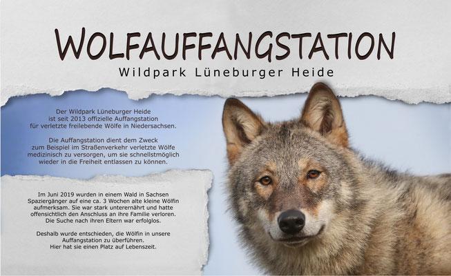 Ein unvergessenes Jahr mit den Wölfen von Tanja Askani