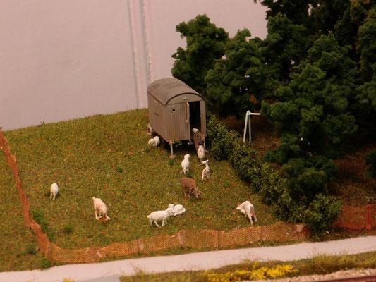 Die Ziegen und Schafe haben auch im Original diese Unterkunft