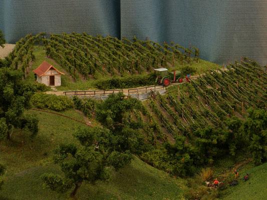 Die Weinberge zwischen Balzholz und dem Haldenhof