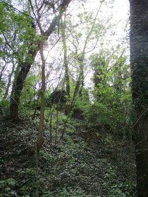 Versteckt zwischen allerlei Bäumen