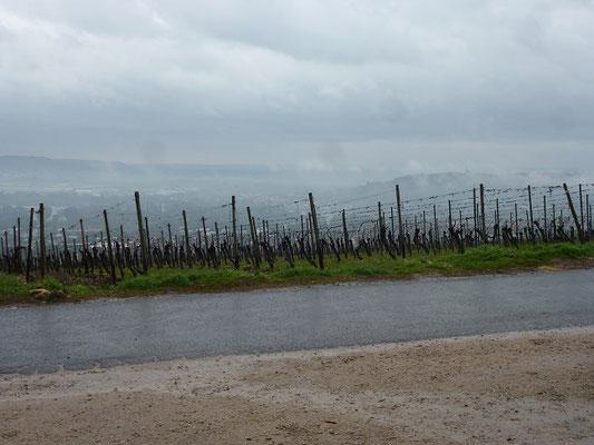 Die Abtei unterhält ein großes Weingut