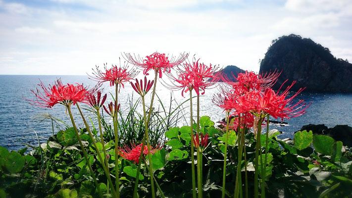 海と彼岸花