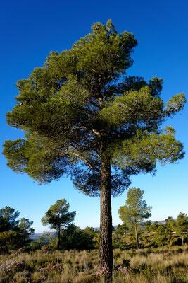 Parque Natural Hoces del Cabriel
