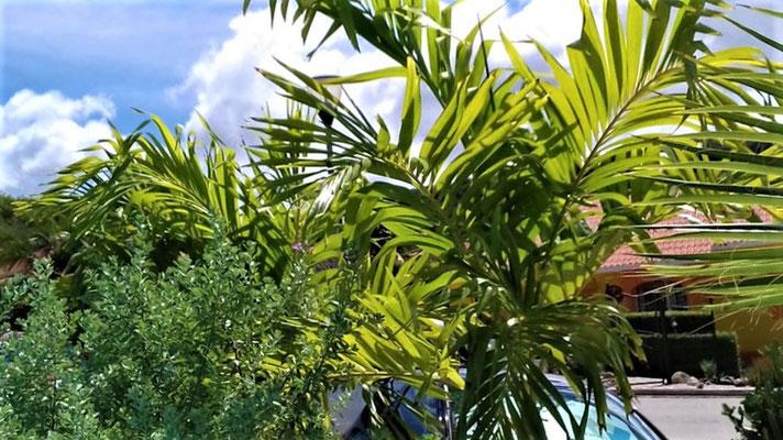 Pflanzen-Urlaub-Curacao-CAS-BON BINI-Villapark Fontein-3