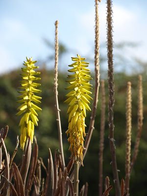 blossom-urlaub-curacao-ferienhaus-karibik