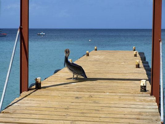 pelikan-urlaub-curacao-ferienhaus-karibik