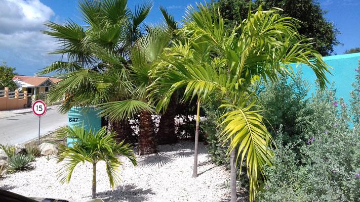 CAS-BON-BINI-Urlaub-Curacao-Ferienhaus-Karibik-Villapark-Fontein-Palmen