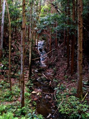 写真F  今回の終点。沢向きの滝。