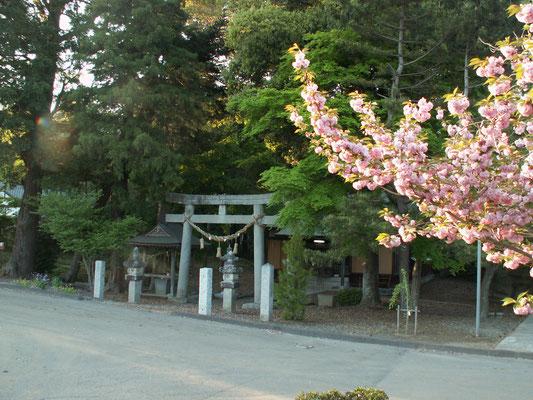 写真E 羽梨山神社2 桜と羽梨山神社。