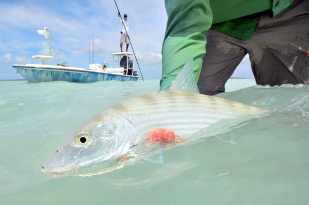 FFTC.club - Fly fishing Bahamas - Crooked and Acklins ISLAND - Bahamas Bonefish