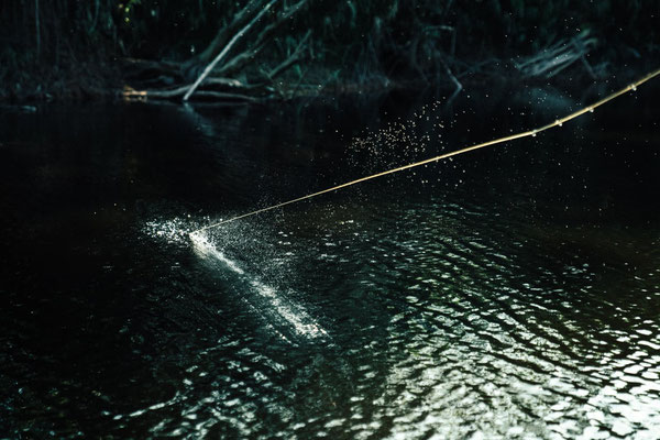 FFTC.club - Untamed Angling Brazil - Marie Rio de Gigantes - Peacock bass fishing thrill