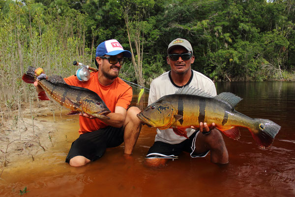 FFTC.club - Untamed Angling Brazil - Marie Rio de Gigantes - Peacock bass double 2