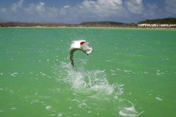 FFTC.club - Fly fishing Bahamas - Crooked and Acklins ISLAND - jumping Tarpon
