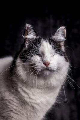 Katze von Tobias Gawrisch (Xplor Creativity)
