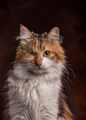 Katze Truddy von Tobias Gawrisch (Xplor Creativity)
