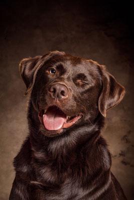 Labrador Hund Max von Tobias Gawrisch (Xplor Creativity)