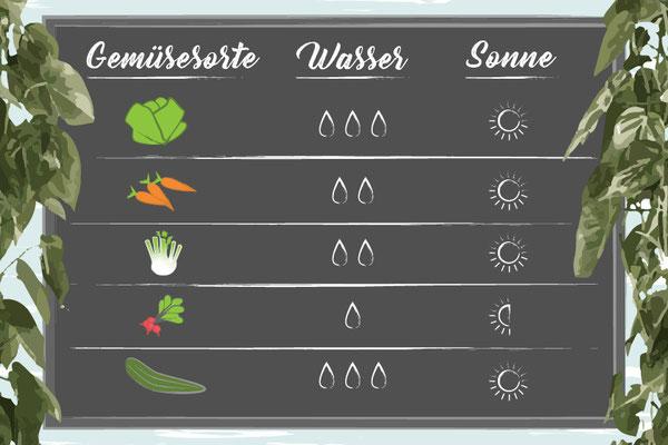 Guide zum Gemüse anpflanzen