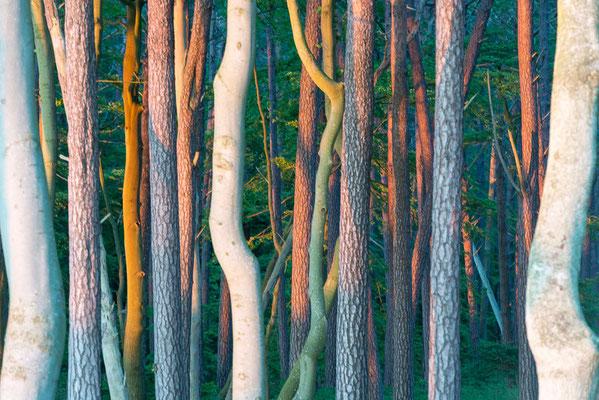 Im Wald, Deutschland