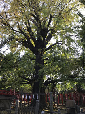 長生きの木
