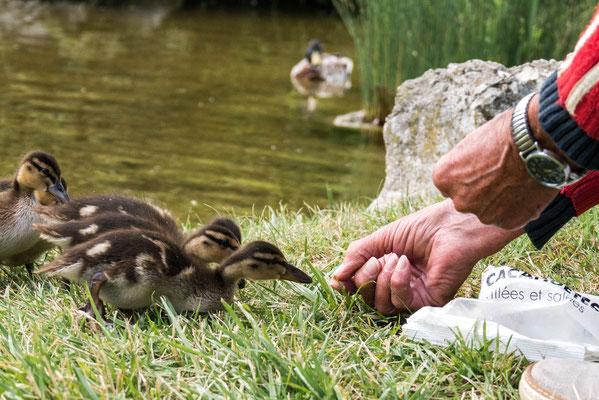 Le vieux & les canards