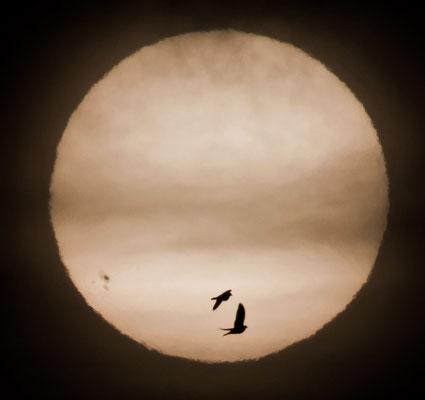 Sonne (und Krähen) am 03.01.2014