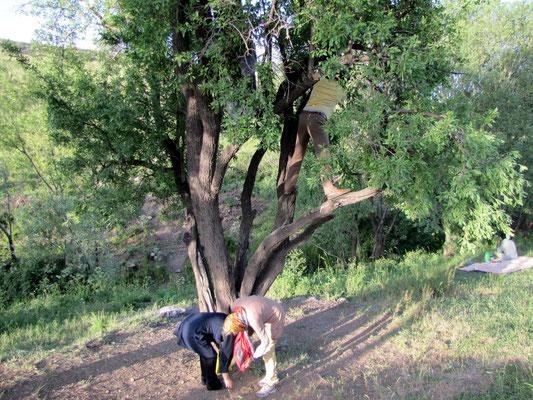 frische Mandeln vom Baum