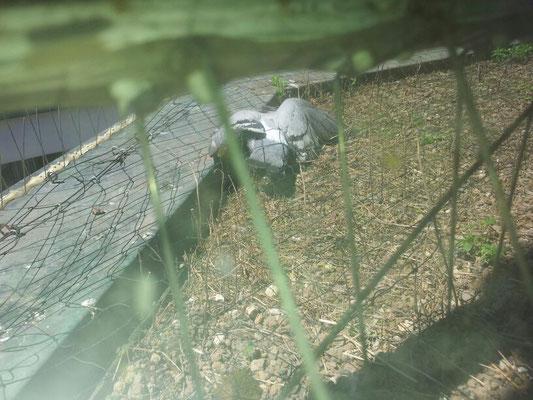 Taubenabwehr wird zur Taubenfalle