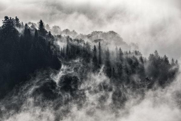 Les obscurs bois de sapins