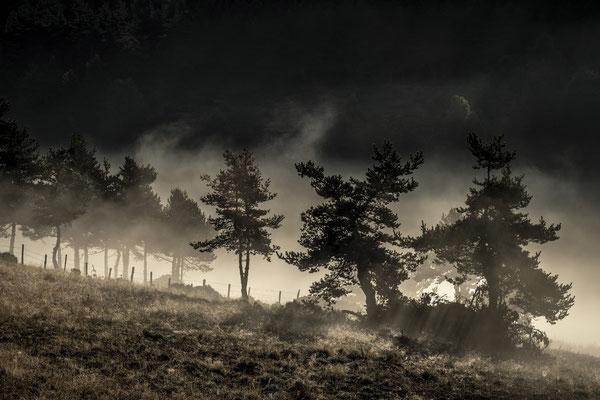 Les arbres noirs