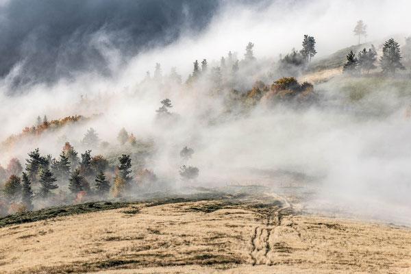 Une brume ensoleillée