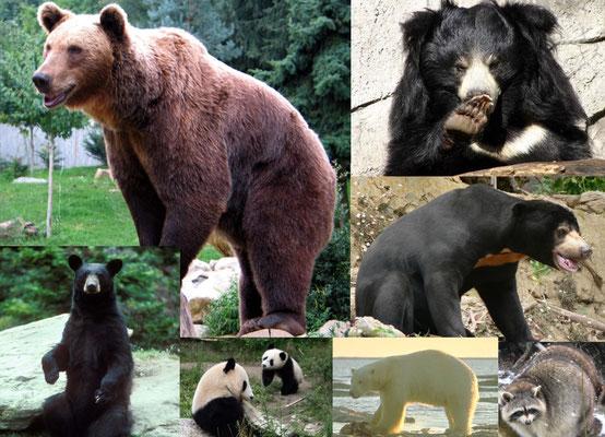 Bärenpark Schweiz - didaktische Materialien für Kinder