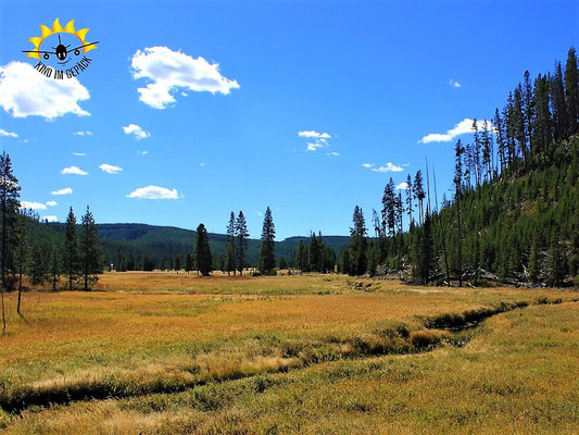 Goldener Herbst im Yellowstone - Indian Summer vom Feinsten.